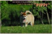 PIPPI - nowy członek rodziny Malakwa Creek 7.06.2015