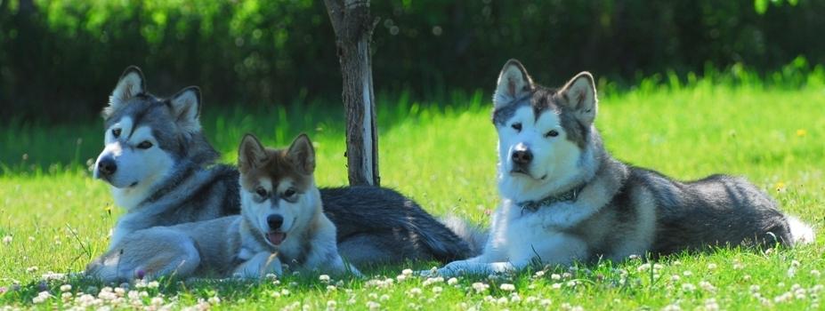 Sakari&Pippi&Ecru